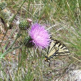 Favorite Butterflies & Bugs